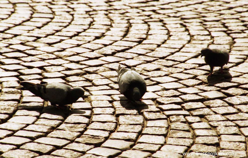 Pigeons, Borås.